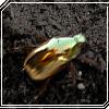 goldenbug