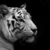 ich will auch als FB angebe... - last post by tigerin