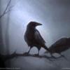 Raven13187