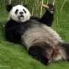 Panda92